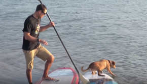 How to Dog SUP with Shredder and Mike T