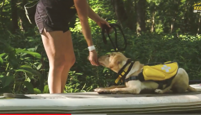 How To Train Your Dog To Paddle Board With You!