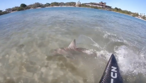 beautiful shark encounter