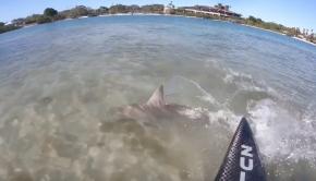 beautiful shark encounter