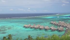 Paddling with Sharks in Tropical Mo'orea Tahiti