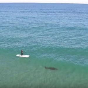Surfing With MANATEE!!!
