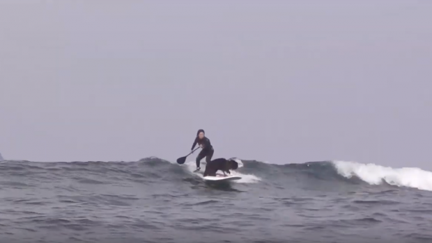 Border Collie Dog & Surfer Girl Surfing