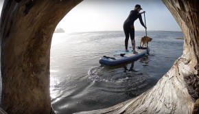 Sprout Surf SUP Dog Paddleboarding