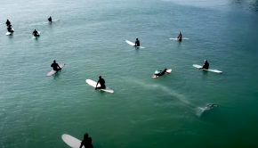 whale swims beneath surfers in california bay